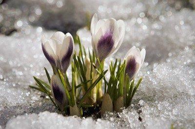 К нам весна шагает.