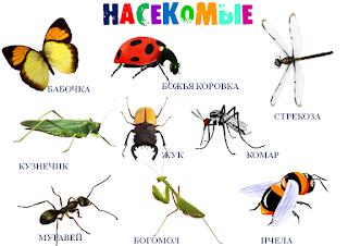 Буклет для родителей «Что нужно знать о насекомых»