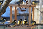 «Встречаем зимующих птиц»