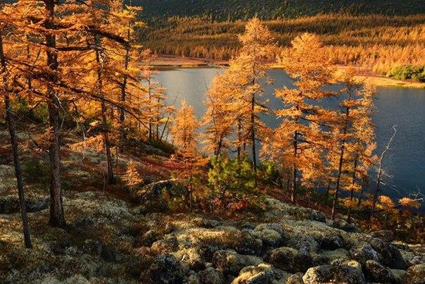 «Растительный мир Прибайкалья осенью